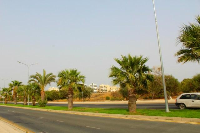 Palme / Palm trees
