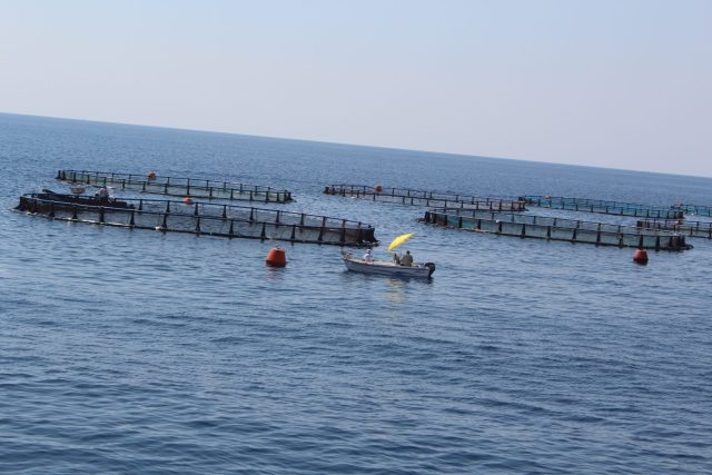 Farma riba / Fish farm