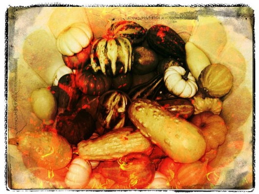 Gourds Thanksgiving
