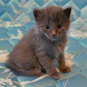 Kitten, Thanksgiving, thankful