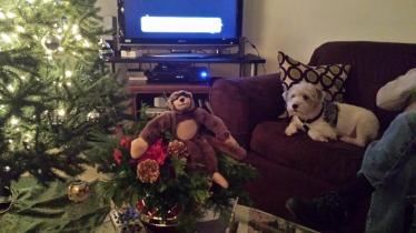 George, Christmas, holiday, travel, Macaroni, dog