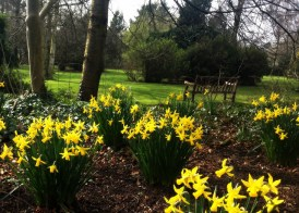 daffodils, Easter, Spring