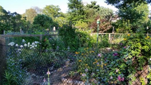 Victory Gardens, Boston, Summer, Sunday