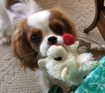 Gratuitous pic of a puppy (Fergus)