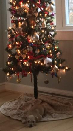 Christmas, Holidays, Monday, S. A. Young, Morty