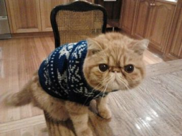 Morty, sweater, dogs in sweaters, Monday, S.A. Young, cat, cats in sweaters