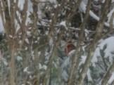 birds, snow, birthday, Orson, Niko, Monday, S. A. Young