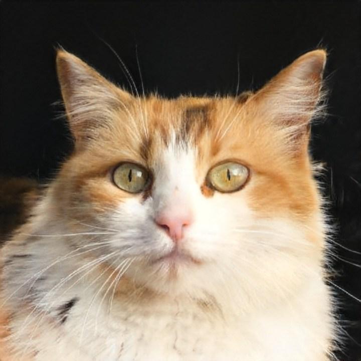 Dit is geen kat