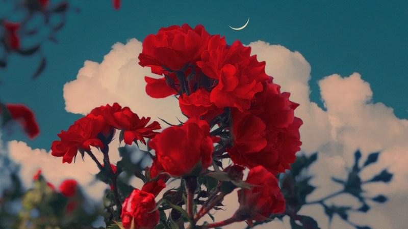 Nachtelijke luchten dienen als de dromerige achtergrond voor de verzadigde bloemen van Sophia Ahamed