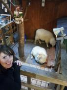 Sheep cafe in Hongdae