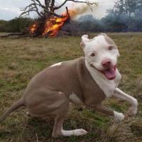 Dog is Having Fun