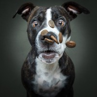 Convenience of CBD Oil for Dogs Treats