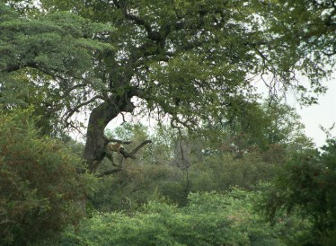 This was our first sighting of a leopard. I'd easily have missed it! How about you?!?!