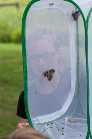 From caterpillars to pupae to moths and butterflies!