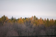 The soft color is beautiful, even with the memory of a spectacular Fall still close at hand...