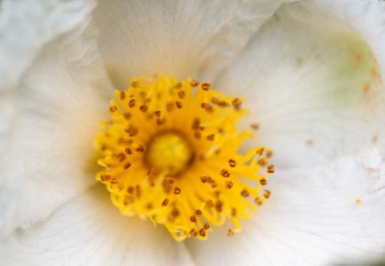 Flowers-1440