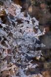 Ice-6677