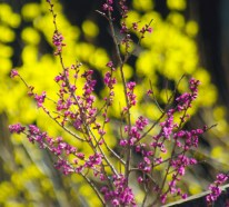 Spring-6011