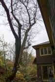 tree-05175