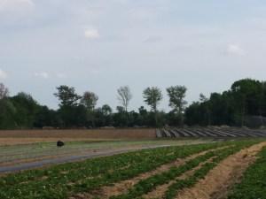 fields at Stillmans Farm