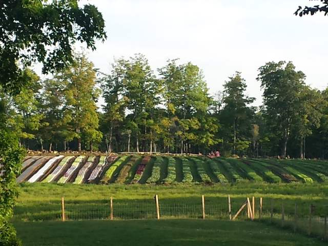 planted fields at Stillmans Farm