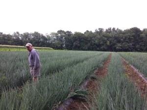 Glenn Stillman in the field tending crops