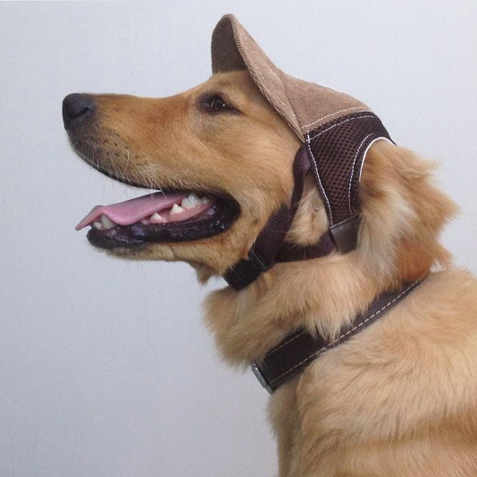 Crafts for Dogs Baseball Hat