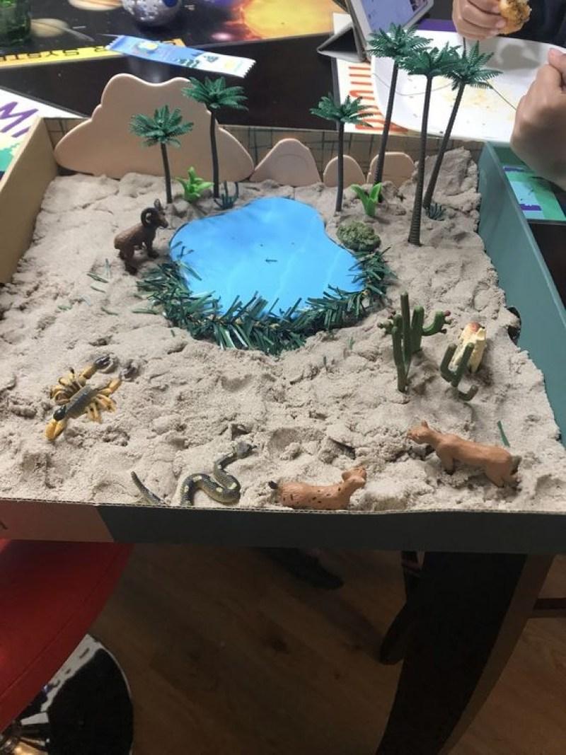 diorama coral reef