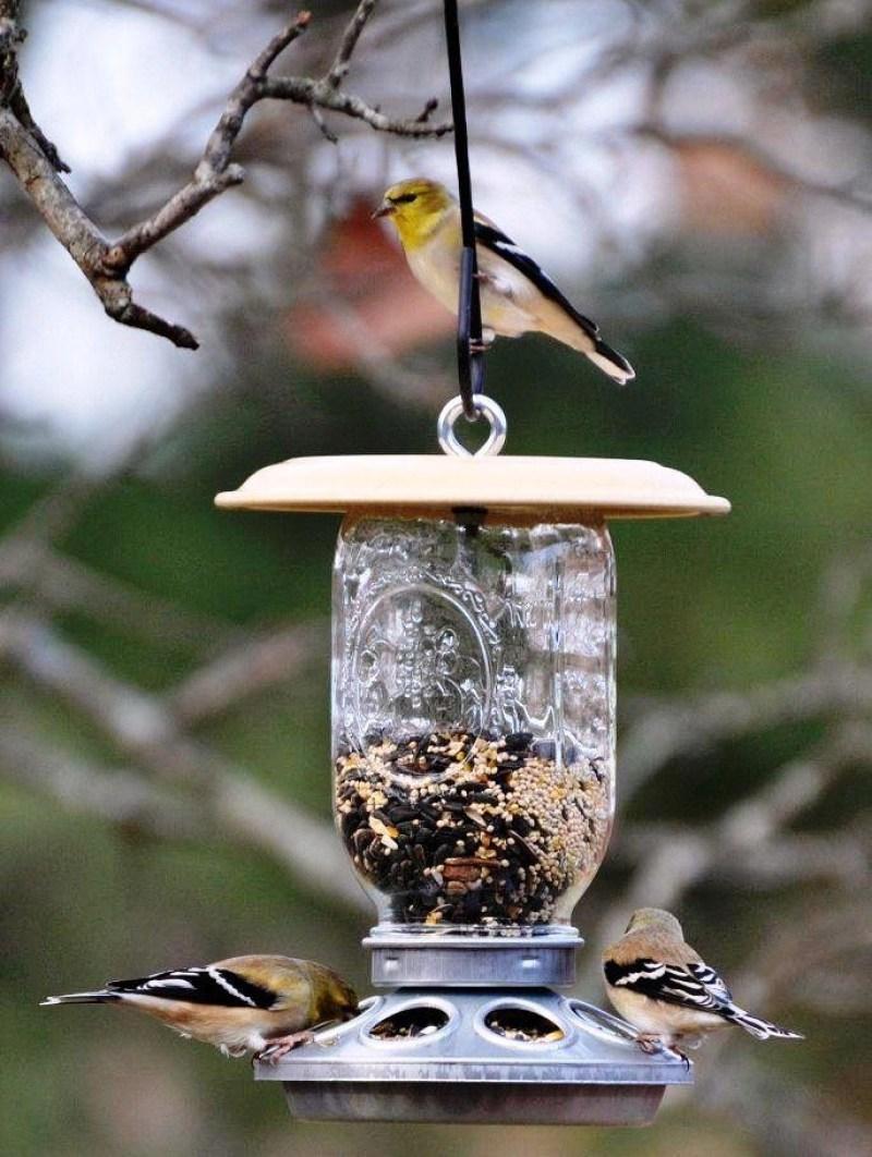 bird feeders decorative