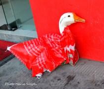 Live Goose