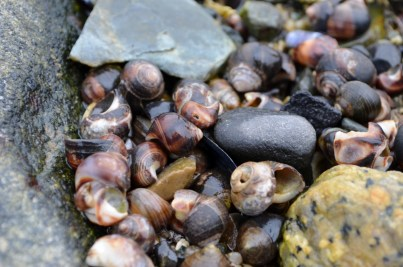 This photo didn't turn out quite like I wanted. I was looking for a shot to turn into a post card. Snails.. hmm