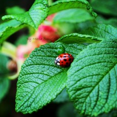 Of all the photo's I took this day, this ladybug shot was my favorite.