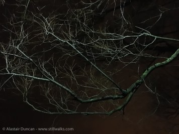 branches in night light