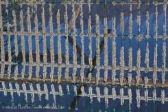 Colwyn Bay Crustaceans