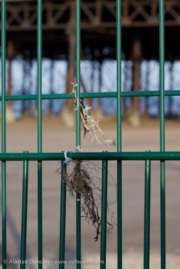 Fence focus 2