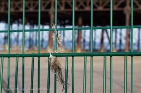 Fence focus