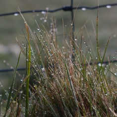 droplets on grass