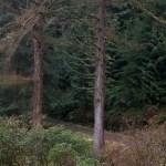 Lledr Valley Forest