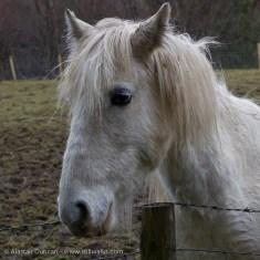 Lledr Valley Horse
