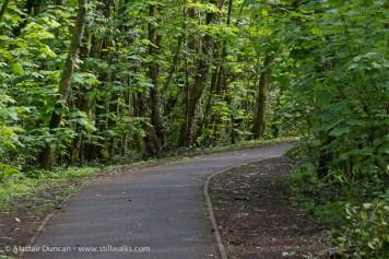 urban woodland footpath