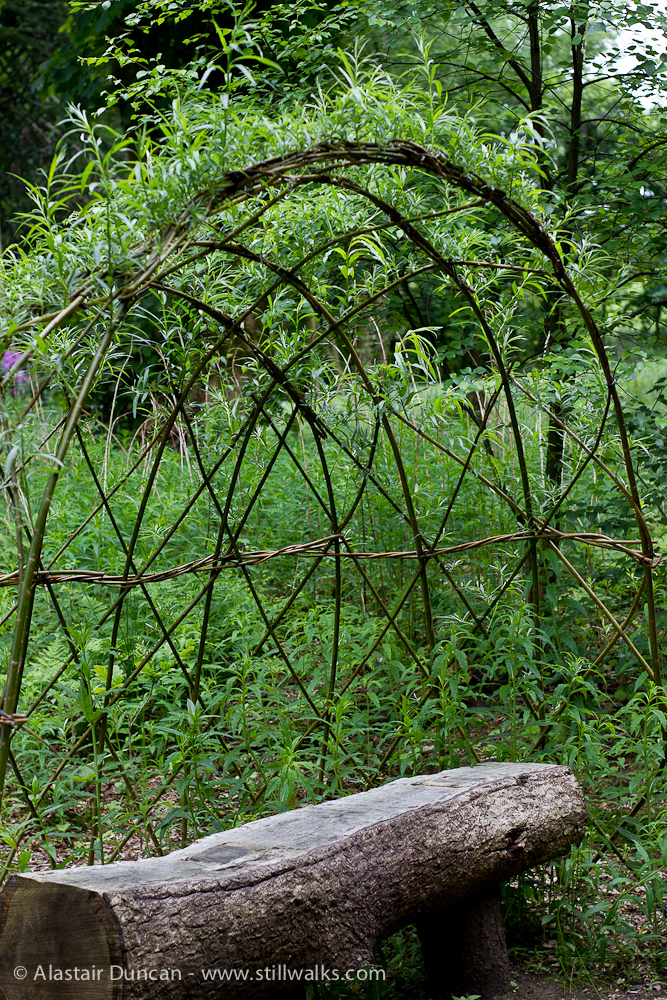 willow arbour in the making