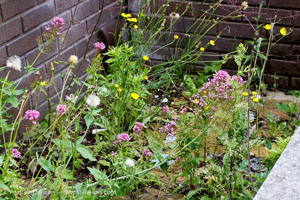 Wildflower Frontage