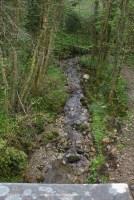 woodland river