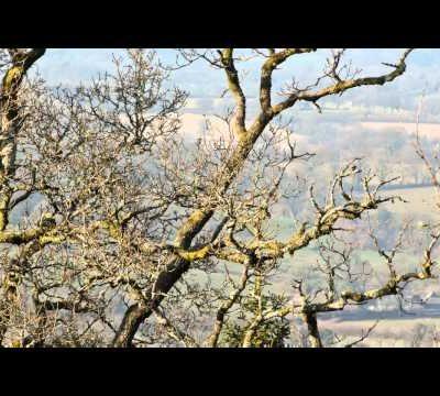 Deer Park Walk - Spring (sample)