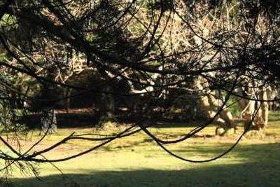 Arboretum Walk - Spring (sample)