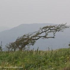 becalmed tree