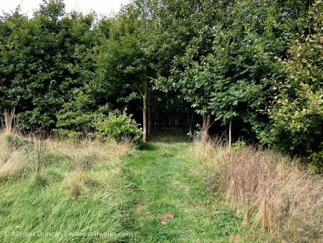 woodland entrance