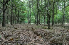 colour woodland 2
