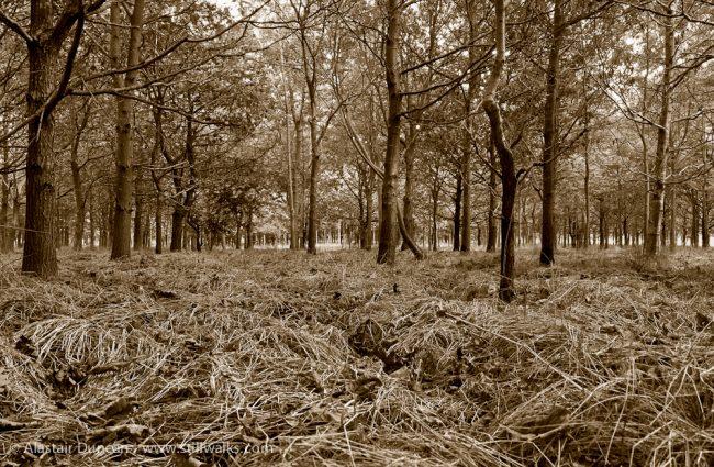 ground level woodland