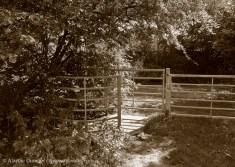 kissing gate sunshine